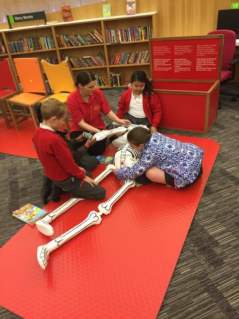 Working together to build a skeleton.