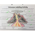 Labelling a volcano