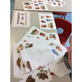 We made collages about the process of a cocoa bean to chocolate
