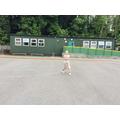 Kwik Cricket with Greenacre