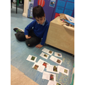 We also compared what plants we find in the rainforest and Desert.