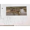 Dinosaur description writing