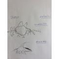 Joshua created two creatures
