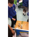 We found out plants grow best when they are watered in room temperature with sunlight.