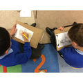 Drawing bees and labelling their bodies.