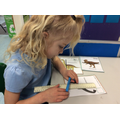 Measuring dinosaurs with cubes and rulers.