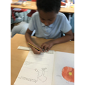 Drawing the layers of the soil.
