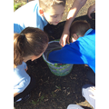 Thrive released our butterflies this week