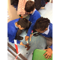 We dissected poo to find out it was a diplodocus.