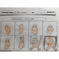 We drew step by step pictures for how to draw a rainforest animal.