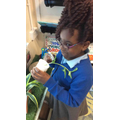 We have been learning this week about how to plant a seed.