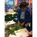 This week we dissected different plants to learn about the different parts of a plant.