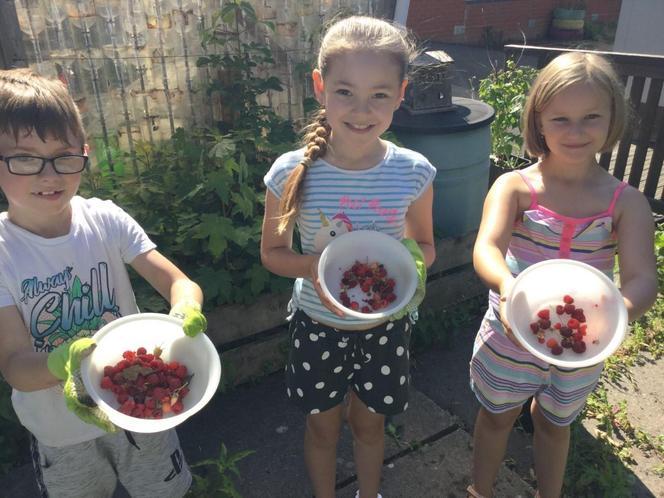 Juicy raspberries picked off the raspberry bush!