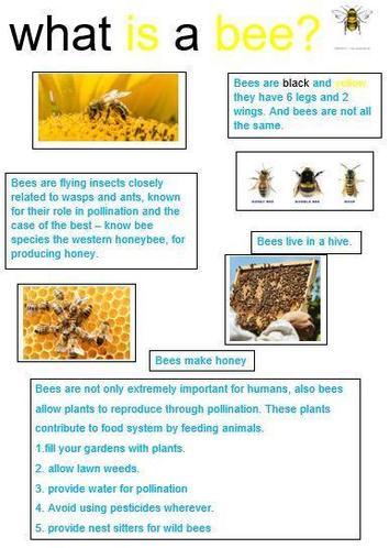 Alyssa M's beautiful bee fact file!