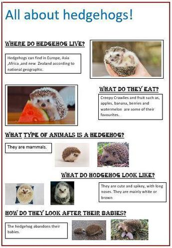 Alyssa M's fabulous hedgehog poster!