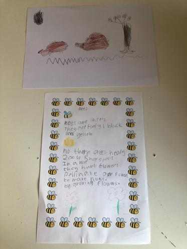 Joel E's brilliant bee information and hedgehogs!