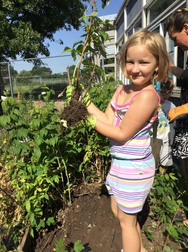 Lena transferring her fabulous raspberry bush!