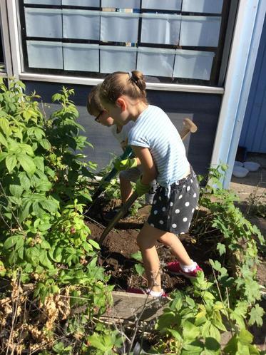 Sam and Bella digging up raspberry bushes!