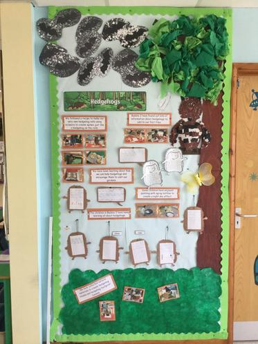 Magnificent hedgehog work by different children!