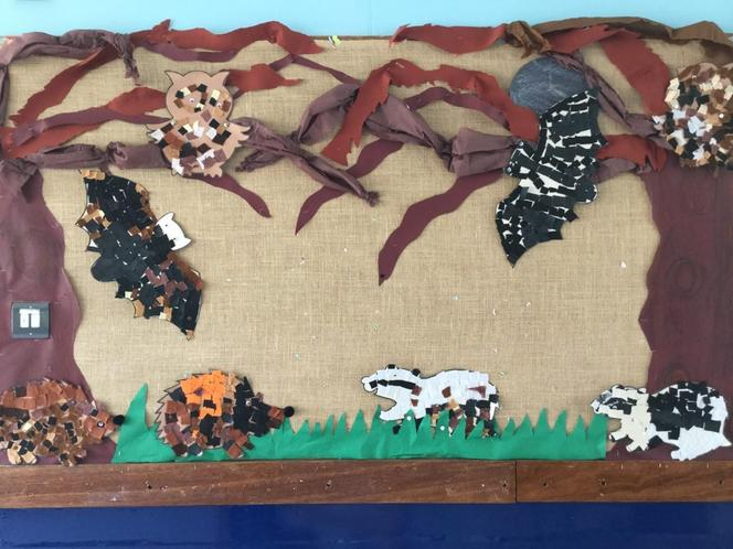 Super nocturnal animals display by children!