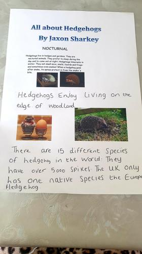 Jaxon's fabulous hedgehog facts!