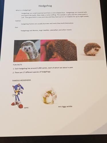 Oscar W's amazing hedgehog poster!
