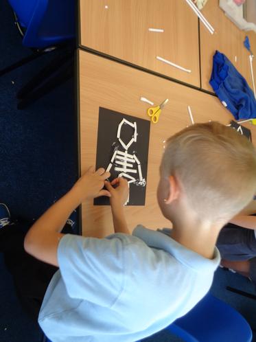Creating human skeletons with art straws