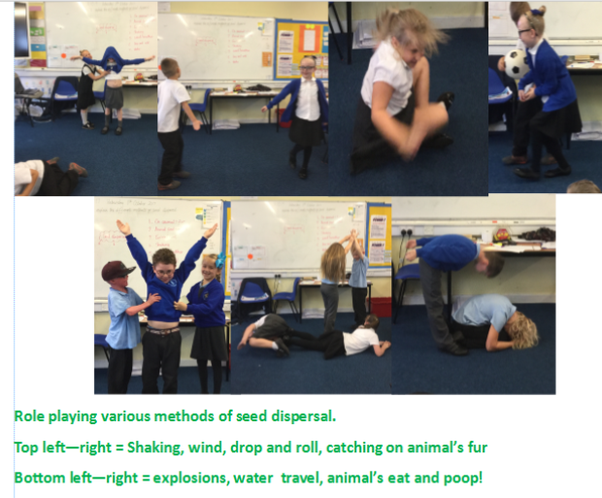 Role playing different methods of seed dispersal