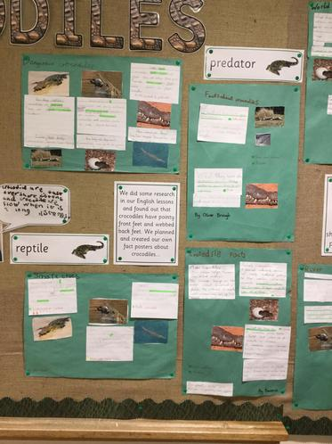 Year 2 are experts on crocodiles,