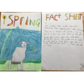 A super Spring fact sheet!