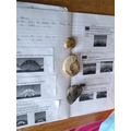 Lucas, we can see that you have loved your work about fossils, and have some real ones too