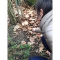 Minibeast hunt at the park