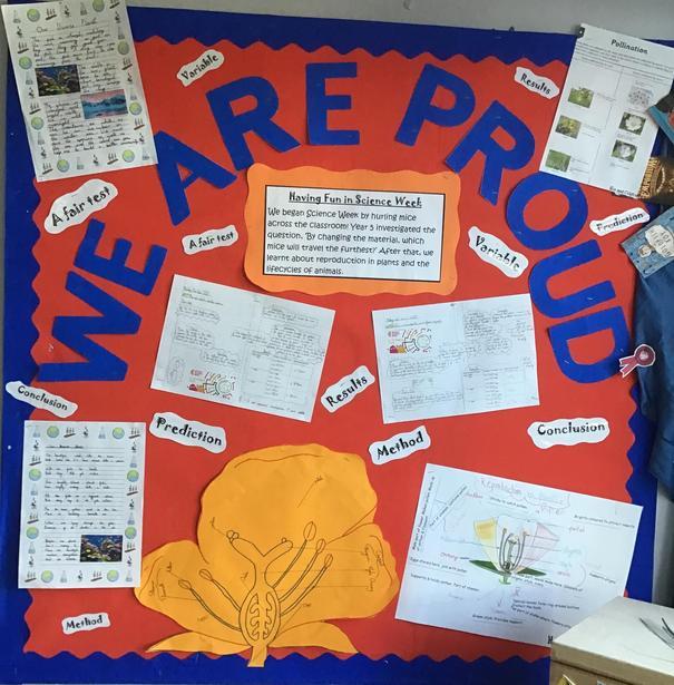 Year 5 Science Week Display