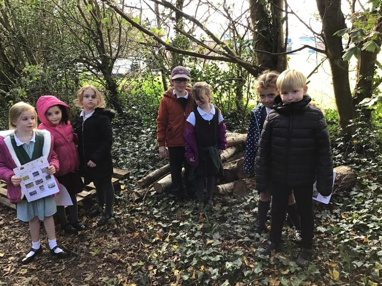 We found log piles in the woodland