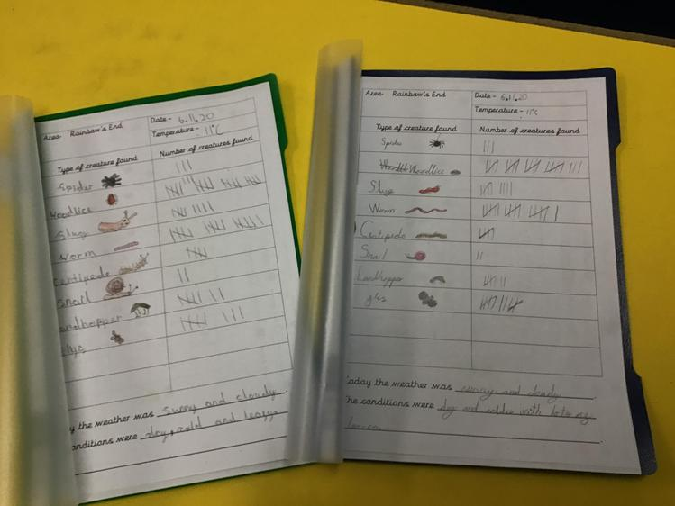 We used our tallying skills to record the number of minibeasts we found.