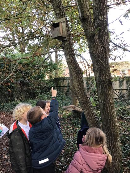 We looked for bird feeders and boxes