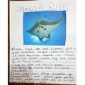 Manta Ray Facts by Krissh.