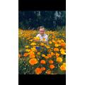 Bobby's Golden Poppies