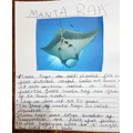 Manta Ray Facts by krissh.