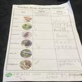 George's birdwatching checklist.