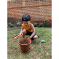 Bogdan planting seeds.