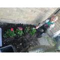 Jack gardening.