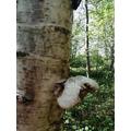 Jack found some fungi on a tree.
