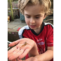 Olly found Palmate newts in the garden.