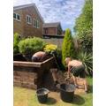 Ryan's pond building