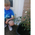 Jack is growing a rose.