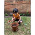 Bogdan planting some seeds.