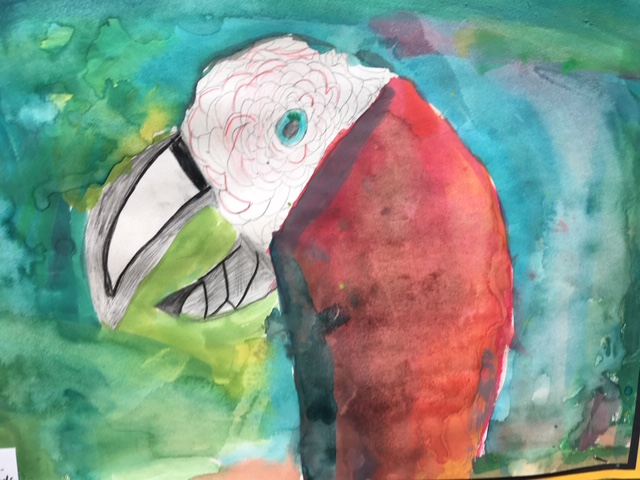 Watercolour painted Macaw