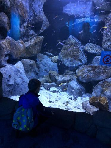 Warming up in the aquarium and butterfly enclosure.