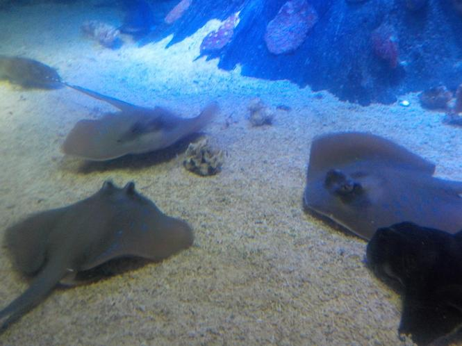 Rays have their gills underneath.